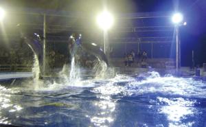 ナイター営業「夜の水族館」とナイトイルカショー