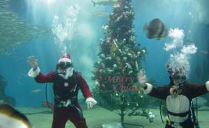 海洋大水槽に巨大クリスマスツリーを設置