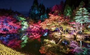 西日本最大 越前焼『三千色の陶あかり』