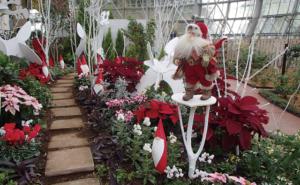 花の展示温室 クリスマス展示